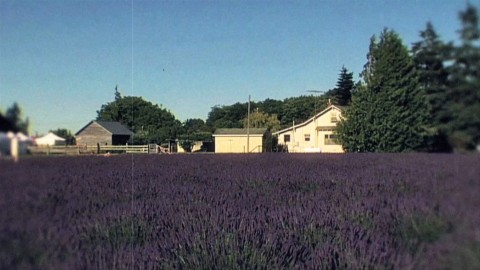 The Business of Lavender